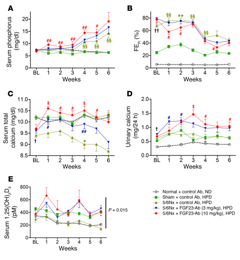 Treatment of 5/6 nephrectomized rats with FGF23-Ab increased serum phosp...