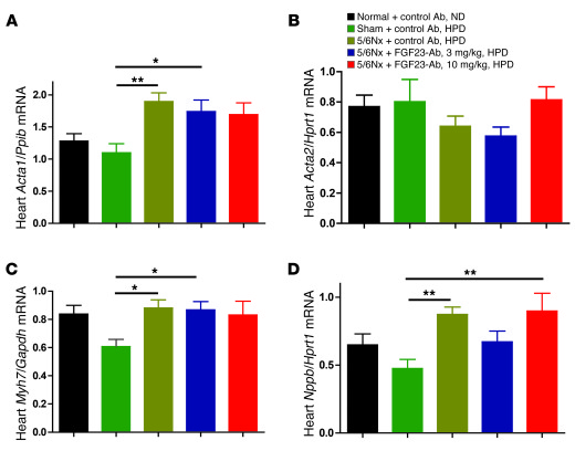 FGF23-Ab treatment had no effect on increased expression of cardiac hype...