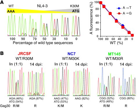 Host-specific adaptation at Gag30 enhances SIVcpz replication fitness in...