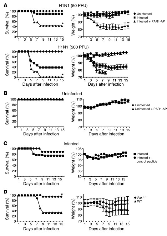 Effect of PAR1 activation and PAR1 deficiency on IAV pathogenicity. (A) ...