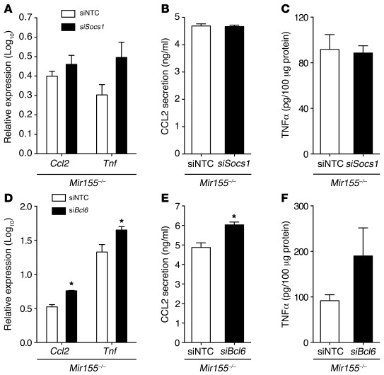 Targeting Bcl6 mediates the proinflammatory effects of miR-155.   (A) Ef...