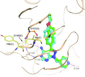 A homology model of PfCDPK4 was generated based on the crystal structure...