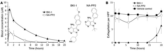 Plots show mouse blood BKI-1 or NA-PP2 concentration (A) and the average...