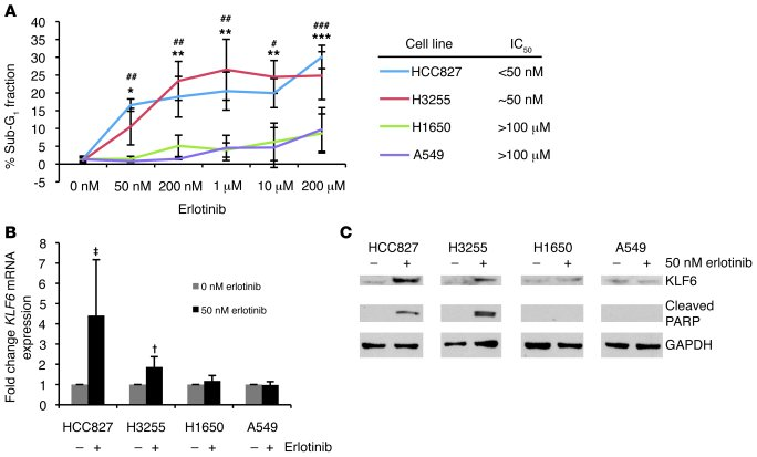 Activated EGFR signaling regulates KLF6 transcription in lung adenocarci...