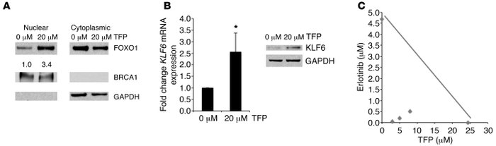 Inhibition of FOXO1 nuclear export results in KLF6 upregulation and incr...