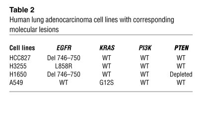 Human lung adenocarcinoma cell lines with corresponding molecular lesions