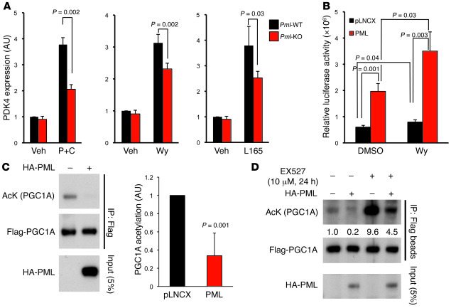 PML regulates PPAR signaling and PGC1A acetylation. (A) Real-time PCR an...