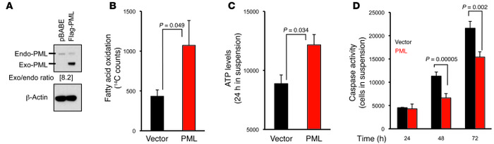 PML expression promotes FAO, ATP production, and cell survival in MCF10A...