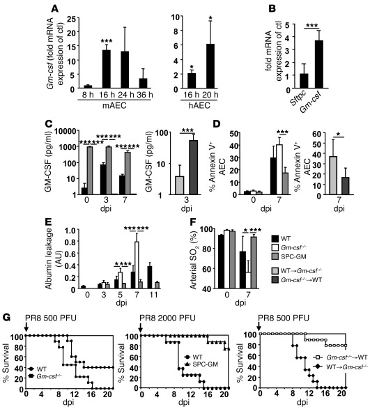 AEC GM-CSF attenuates acute lung injury and increases survival in PR8 in...