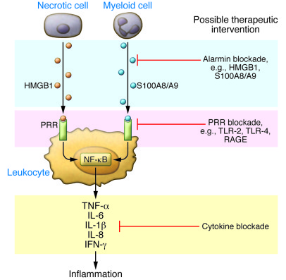 Alarmin pathway as potential therapeutic target in the innate inflammato...