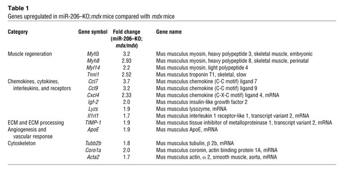 Genes upregulated in miR-206–KO;mdx mice compared with mdx mice