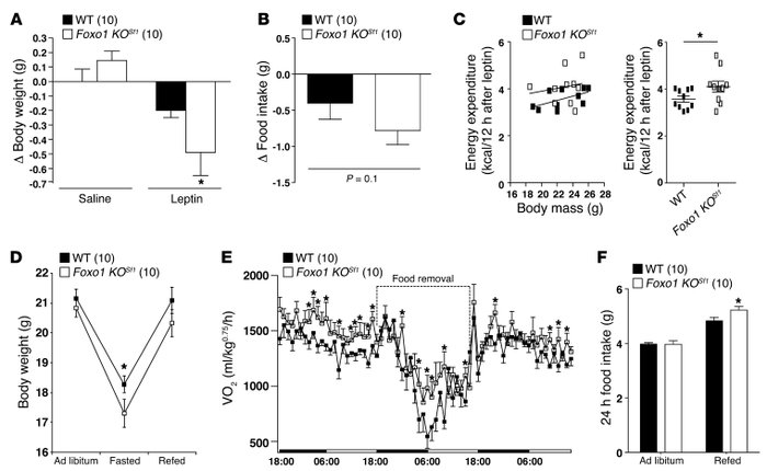 Effect of FOXO1 KO in the VMH on leptin administration and fasting. (A) ...