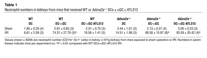 Neutrophil numbers in kidneys from mice that received WT or Adora2a–/– D...