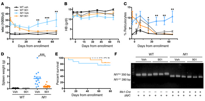 901 reduces myeloproliferation and enhances erythropoiesis in Mx1-Cre;Nf...