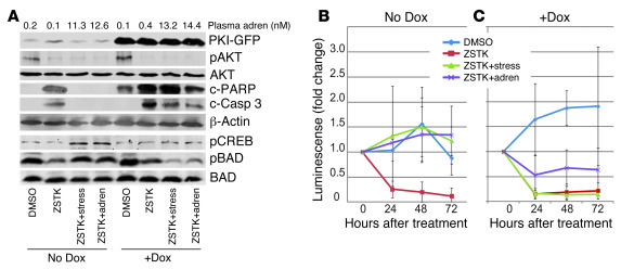 Activation of PKA is necessary for stress- or adrenaline-induced protect...
