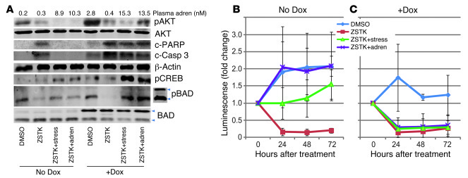 Activation of pBADS112 is necessary for stress- or adrenaline-induced pr...