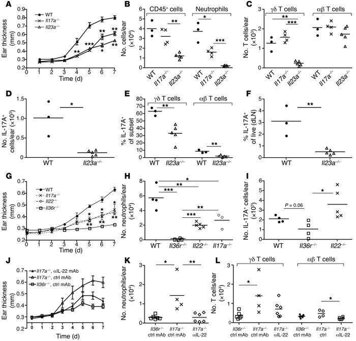 Il36r–/– mice are better protected than mice lacking IL-23, IL-17A, or ...