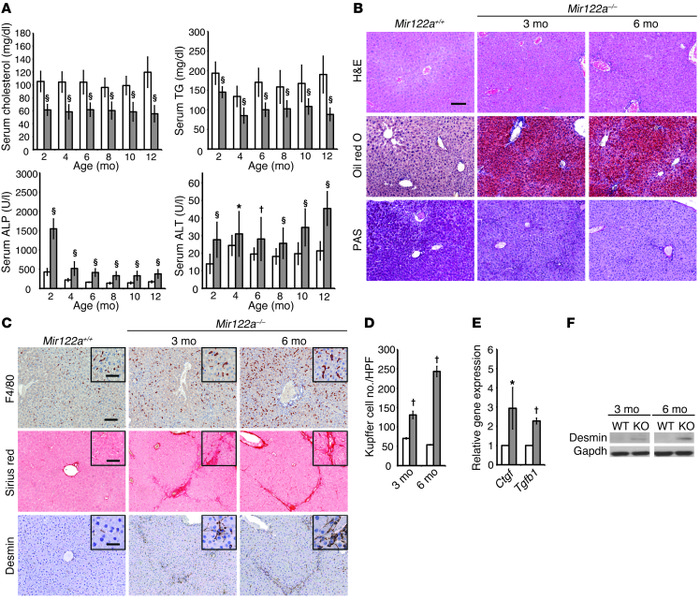 Pathophysiological features of Mir122a–/– mice.   (A) Total serum choles...