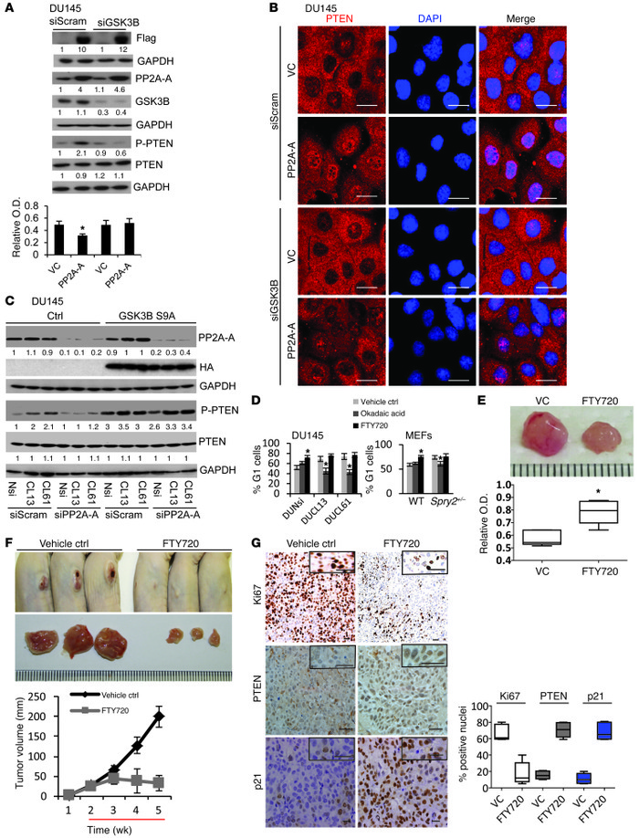 PP2A activation suppresses tumorigenesis by increasing nuclear localizat...