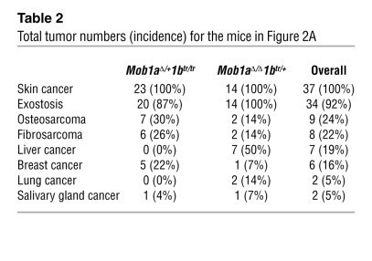 Total tumor numbers (incidence) for the mice in Figure 2A