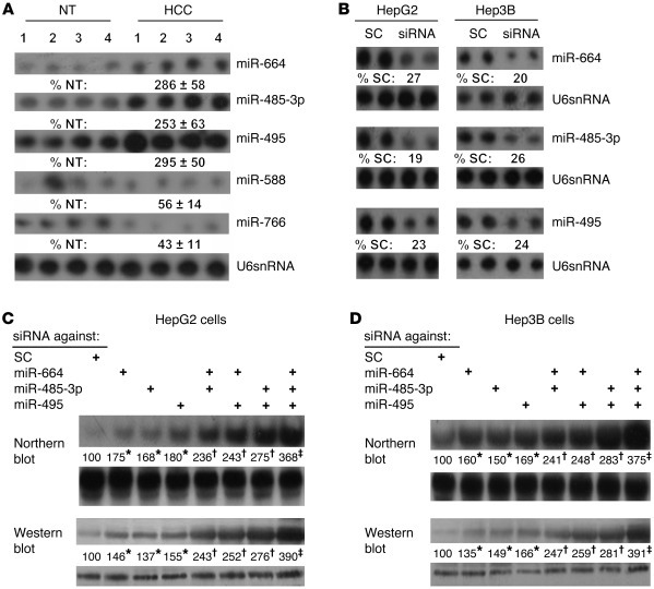 miR-664, miR-485-3p, and miR-495 are induced in HCC and negatively regul...