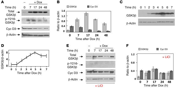Inhibition of GSK3β activity corrects cyclin D3 levels in CUG-expressing...