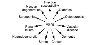Aging is the leading risk factor for most serious chronic diseases and d...