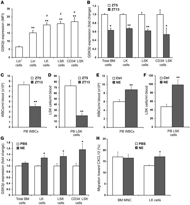 GSK3β expression in HSPCs correlates with their physiological egress rat...