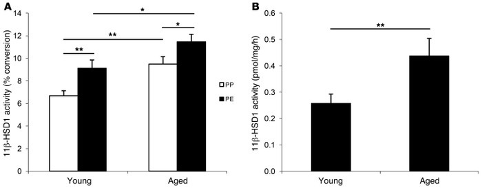 11β-HSD1 activity increases in aging skin ex vivo. (A) 11β-HSD1 activity...