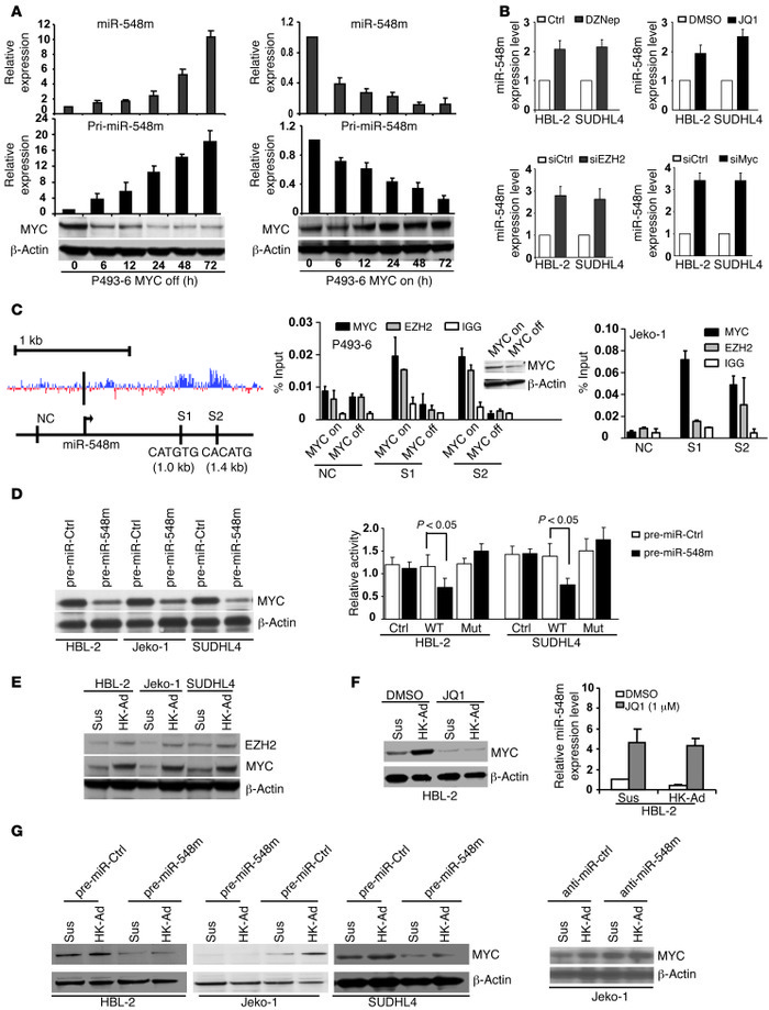 c-Myc/miR-548m feed-forward circuit contributes to stroma-mediated c-Myc...
