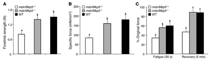 MKP-5 deficiency in mdx mice leads to restored muscle function.   (A) Fo...
