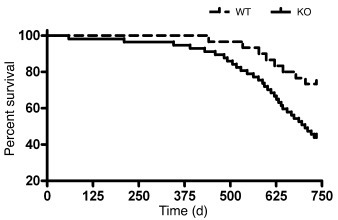 Survival analysis in Gsk3a KO and WT mice.   Cumulative survival curves ...