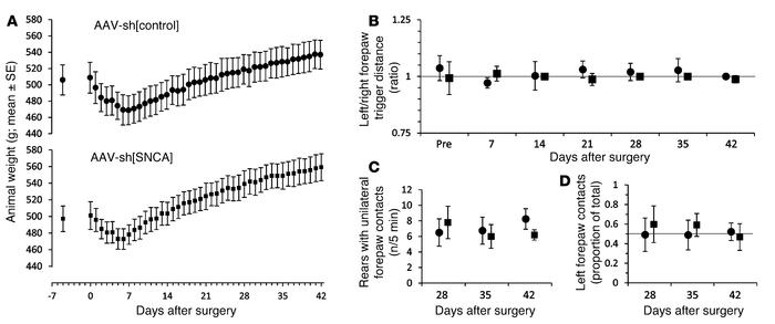 Absence of motor deficit following nigral α-synuclein knockdown. Animals...