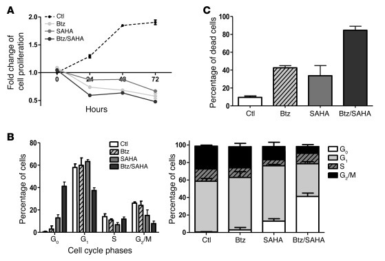 The combination of Btz with SAHA inhibits proliferation, induces cell cy...