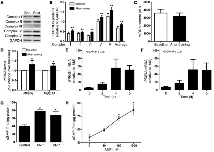 Functional link between NPRA expression and oxidative markers in human s...