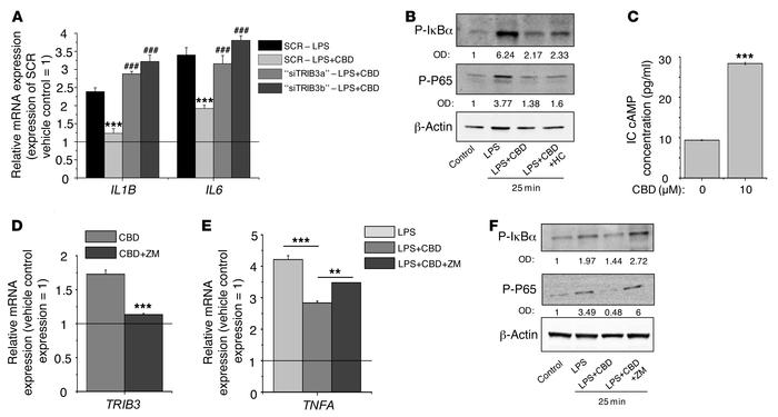 Antiinflammatory actions of CBD are coupled to A2a receptor-dependent up...
