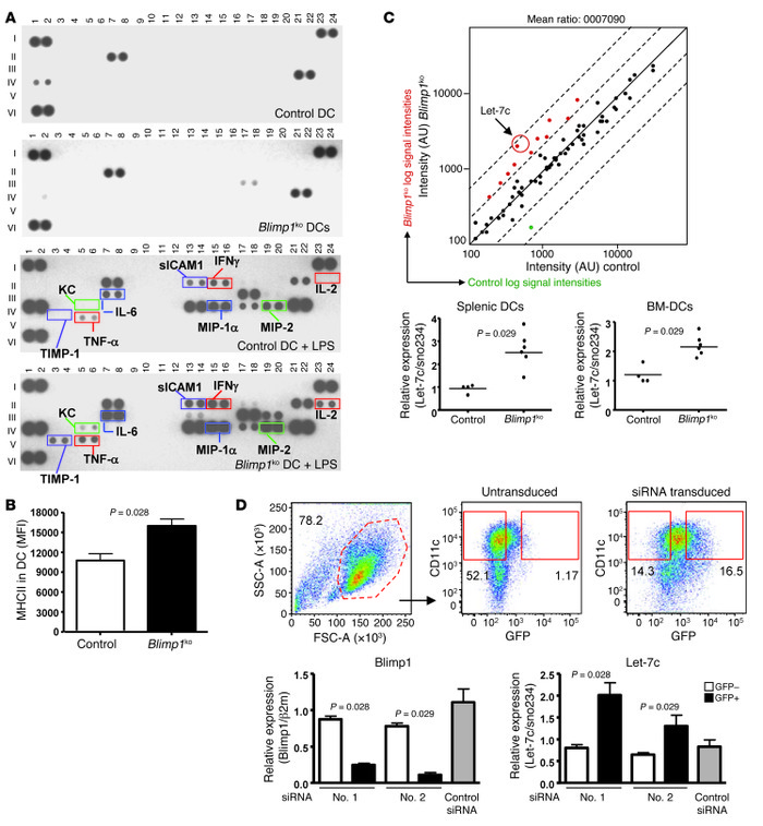 Proinflammatory phenotype and increased let-7c in Blimp1-deficient DCs. ...