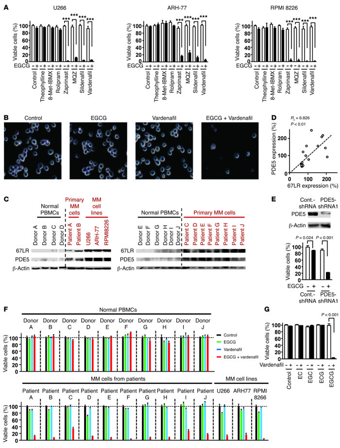 Abnormal overexpression of PDE5 attenuates EGCG-induced cell death in MM...