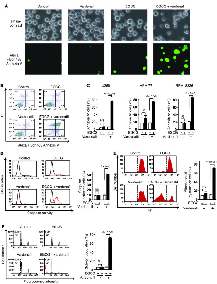 Caspase activation and collapse of Δϕm are involved in 67LR-dependent ce...