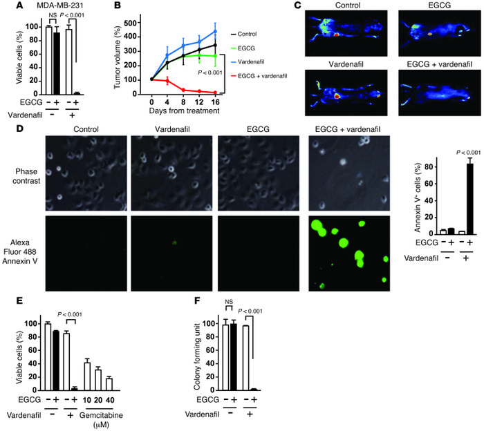 PDE5 inhibition potentiates the anticancer effect of EGCG. (A) MDA-MB-23...