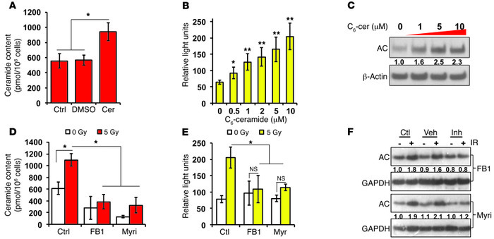 IR-stimulated ceramide induces AC gene expression. PPC-1 cells were trea...