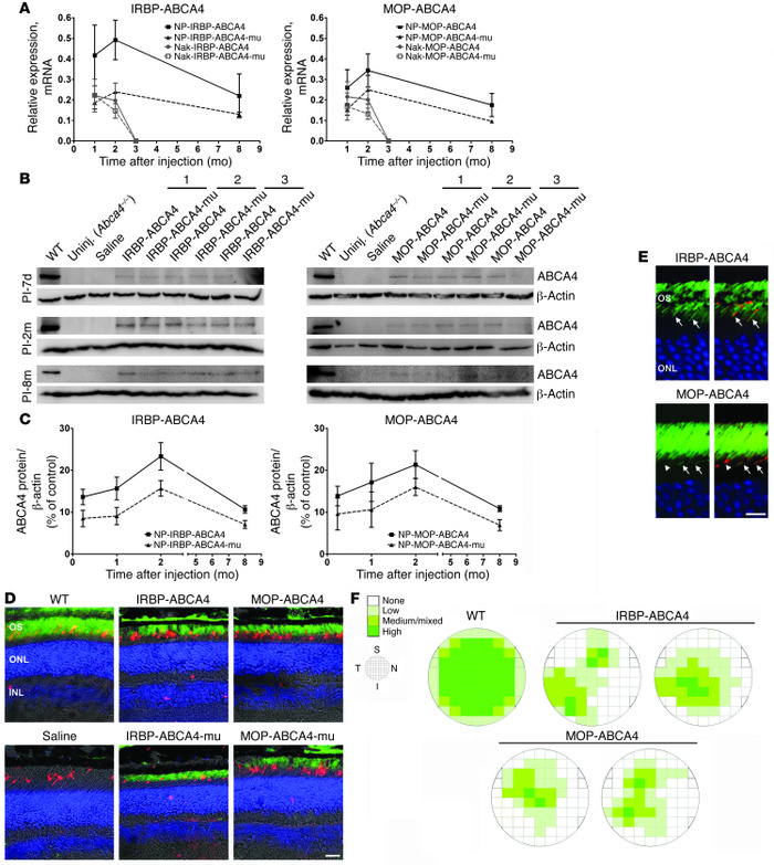 NP-mediated ABCA4 gene delivery induces persistent gene expression throu...