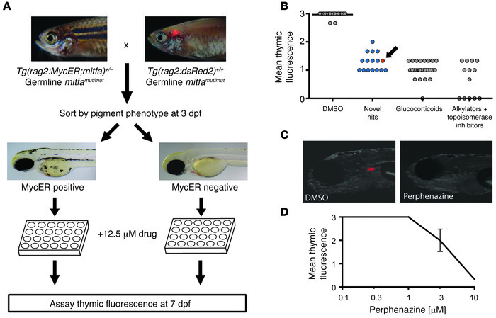 Zebrafish screen for small molecules that are toxic to MYC-overexpressin...