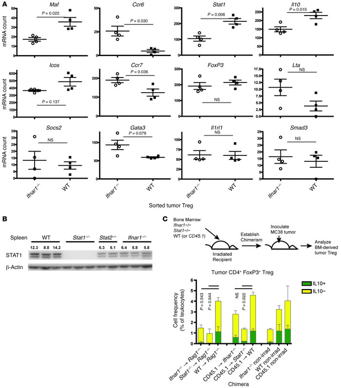 Type I IFN signaling is required for tumor Treg activation. (A) nCounter...