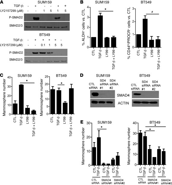 TGF-β increases the CSC population in a SMAD4-dependent manner. (A) SUM1...