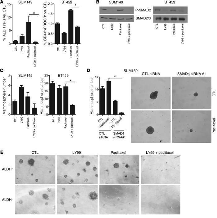 Paclitaxel requires TGF-β signaling to expand CSCs. (A) SUM159 and BT549...