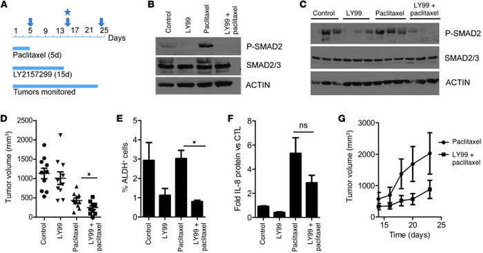 TGF-β inhibition in vivo abrogates tumor-initiating potential after chem...