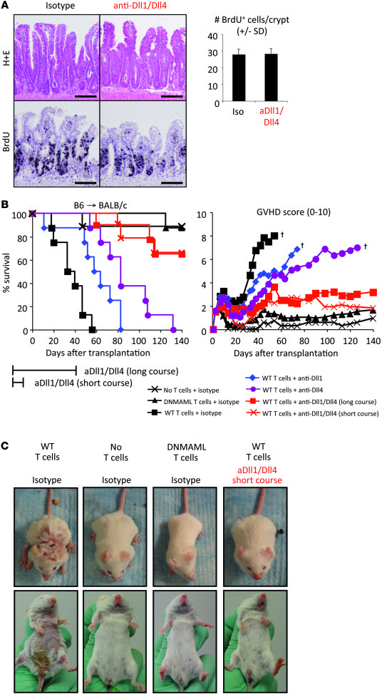 Transient blockade of Dll1 and Dll4 protects mice from lethal GVHD witho...