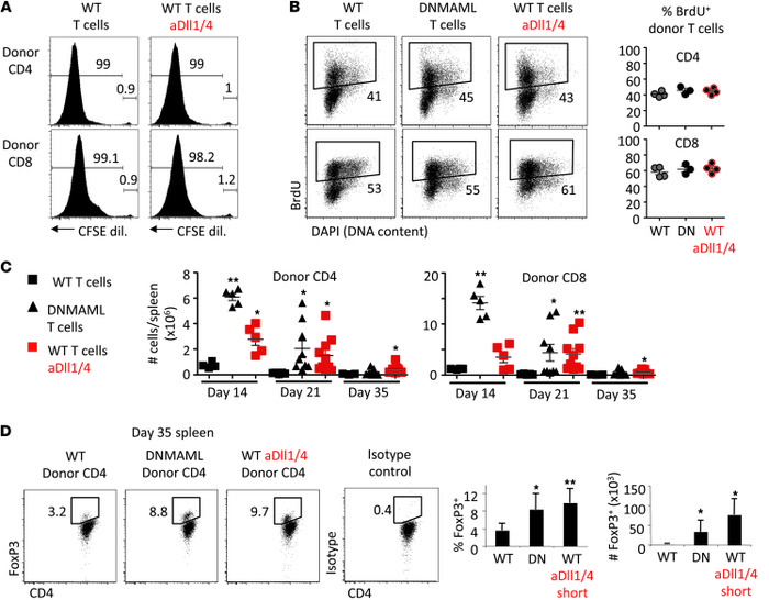 Preserved in vivo T cell proliferation and increased expansion of Tregs ...