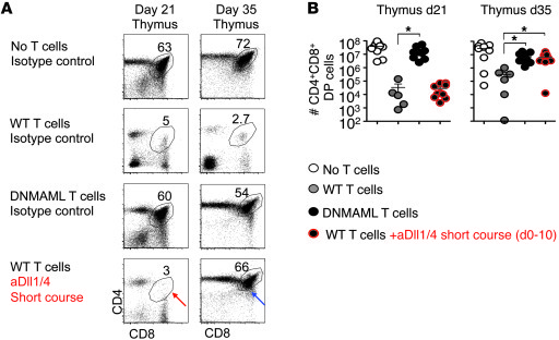 Protection from thymic GVHD upon transient systemic Dll1/Dll4 blockade. ...